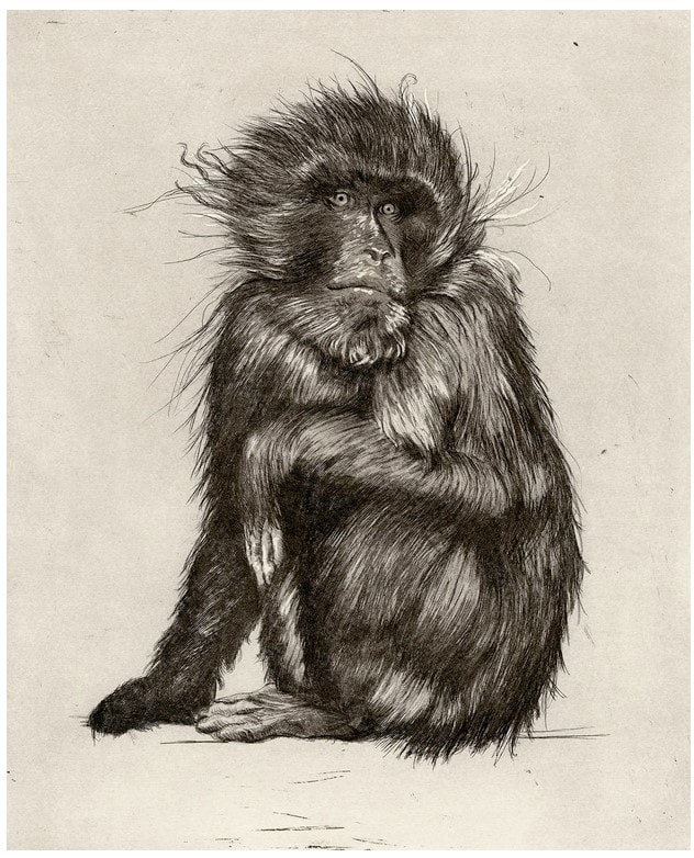 picture of a monkey